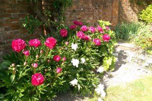 salisbury_christian_almshouse_flowers3